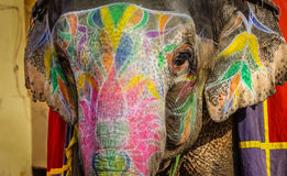 Decorated elephant in India. Decorated elephant at the Amber fort in Jaipur Royalty Free Stock Photos