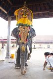 Decorated Elephant in the Temple. royalty free stock photo