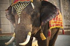 Decorated elephant. Thai style headdress decorated to elephant Stock Images