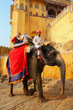Decorated elephant with tourists going on the cobblestone path t. O Amber Fort near Jaipur, Rajasthan, India. Elephant rides are popular tourist attraction in Stock Images