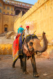 Decorated elephant with tourists going on the cobblestone path t. O Amber Fort near Jaipur, Rajasthan, India. Elephant rides are popular tourist attraction in Stock Photography