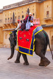 Decorated elephant with tourists walking in Jaleb Chowk main co. Urtyard in Amber Fort, Rajasthan, India. Elephant rides are popular tourist attraction in Amber Stock Image