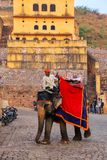 Decorated elephant walking on the cobblestone street near Amber. Fort, Rajasthan, India. Elephant rides are popular tourist attraction in Amber Fort Stock Photography