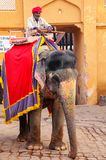 Decorated elephant walking on the cobblestone street near Amber. Fort, Rajasthan, India. Elephant rides are popular tourist attraction in Amber Fort Royalty Free Stock Image