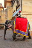 Decorated elephant walking on the cobblestone street near Amber. Fort, Rajasthan, India. Elephant rides are popular tourist attraction in Amber Fort Stock Images