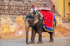 Decorated elephant walking on the cobblestone street near Amber. Fort, Rajasthan, India. Elephant rides are popular tourist attraction in Amber Fort Stock Photo