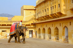 Decorated elephant walking in Jaleb Chowk main courtyard in Am. Ber Fort, Rajasthan, India. Elephant rides are popular tourist attraction in Amber Fort Stock Images