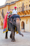 Decorated elephant walking in Jaleb Chowk main courtyard in Am. Ber Fort, Rajasthan, India. Elephant rides are popular tourist attraction in Amber Fort royalty free stock photo