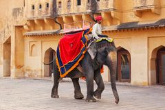 Decorated elephant walking in Jaleb Chowk main courtyard in Am. Ber Fort, Rajasthan, India. Elephant rides are popular tourist attraction in Amber Fort Stock Photo