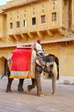 Decorated elephant walking in Jaleb Chowk main courtyard in Am. Ber Fort, Rajasthan, India. Elephant rides are popular tourist attraction in Amber Fort stock photography