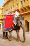 Decorated elephant walking in Jaleb Chowk main courtyard in Am. Ber Fort, Rajasthan, India. Elephant rides are popular tourist attraction in Amber Fort Royalty Free Stock Image