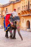 Decorated elephant walking in Jaleb Chowk main courtyard in Am. Ber Fort, Rajasthan, India. Elephant rides are popular tourist attraction in Amber Fort royalty free stock images