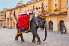 Decorated elephant walking in Jaleb Chowk main courtyard in Am. Ber Fort, Rajasthan, India. Elephant rides are popular tourist attraction in Amber Fort stock image