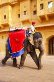 Decorated elephant walking in Jaleb Chowk main courtyard in Am. Ber Fort, Rajasthan, India. Elephant rides are popular tourist attraction in Amber Fort stock photos