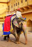 Decorated elephant walking in Jaleb Chowk main courtyard in Am. Ber Fort, Rajasthan, India. Elephant rides are popular tourist attraction in Amber Fort royalty free stock photos