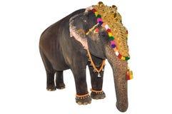 Decorated elephant. With white background Royalty Free Stock Image