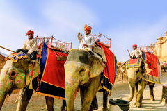 Decorated elephants carry drivers Royalty Free Stock Image