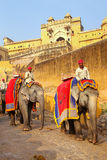 Decorated elephants going on the cobblestone path from Amber For Stock Photos