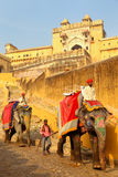 Decorated elephants going on the cobblestone path from Amber For Stock Image