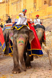Decorated elephants going on the cobblestone path from Amber For Stock Photography