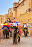 Decorated elephants going on the cobblestone path from Amber For Royalty Free Stock Images
