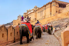 Decorated elephants going on the cobblestone path to Amber Fort Stock Photos