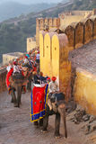 Decorated elephants going on the cobblestone path to Amber Fort Stock Image