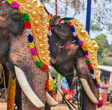 Decorated elephants in Hindu temple at festival Royalty Free Stock Image