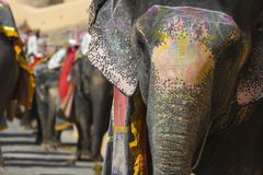 Decorated elephants in Jaleb Chowk in Amber Fort in Jaipur, India. stock photography