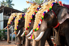 Decorated elephants for parade Royalty Free Stock Photos