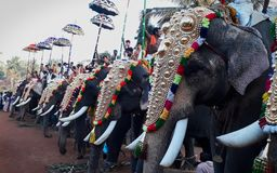 Elephants stand in line for kallazhi temple festival Stock Photos