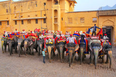 Decorated elephants waiting for tourists near Amber Fort in Raja Stock Photos