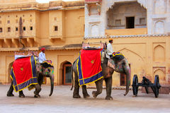 Decorated elephants walking in Jaleb Chowk main courtyard in A Stock Image