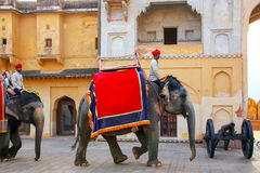 Decorated elephants walking in Jaleb Chowk main courtyard in A Royalty Free Stock Photography