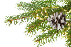 Decorated fir tree with cone Royalty Free Stock Photography