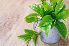 Decorated fresh tea leaves in tin jar Royalty Free Stock Photos