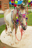 Decorated horse. Fancy Decorated Horse. Colorful horse stock image