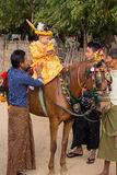 Decorated horse, buffalo and local people who participated in the donation channeled ceremony in Bagan. Myanmar, Burma Stock Photography