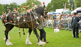 Decorated horse competition. Royalty Free Stock Photo