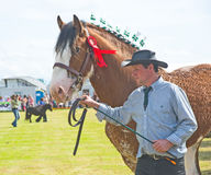 Decorated horse at Nairn Show. Stock Photography