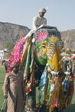 Decorated Indian Elephant. Decorated elephant and mahout at the annual elephant festival in Jaipur, India royalty free stock photos