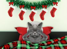 Decorated for new year living room with cute cat wearing santa costume royalty free stock photography