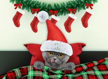 Decorated for new year living room with cute little cat wearing santa costume stock photo