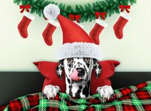 Decorated for new year living room with dalmatian dog wearing santa costume royalty free stock photography