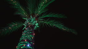 Decorated palm tree. Top of the decorated palm tree in the evening stock footage