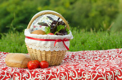 Decorated picnic basket and plate, buns and bunch of basil and salad, green landscape Stock Photography