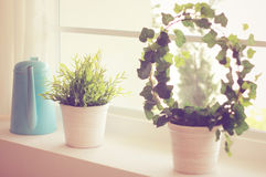 Decorated plant and watering can. With retro filter effect stock photos