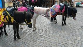 Decorated ponies stand on Deribasovskaya street in the city of Odessa. Odessa, Ukraine, May 2019: - Decorated ponies stand on Deribasovskaya street in the city stock video footage