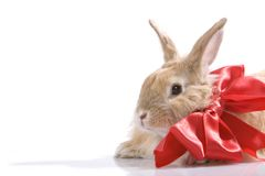Decorated rabbit Stock Image
