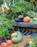 Decorated ripe vegetables garden Royalty Free Stock Image